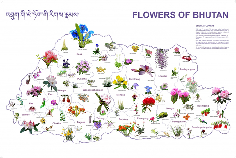 flowers-of-bhutan-1024x690